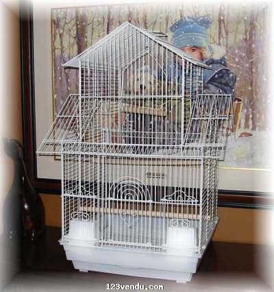 cage a oiseaux vendre annonces class es. Black Bedroom Furniture Sets. Home Design Ideas
